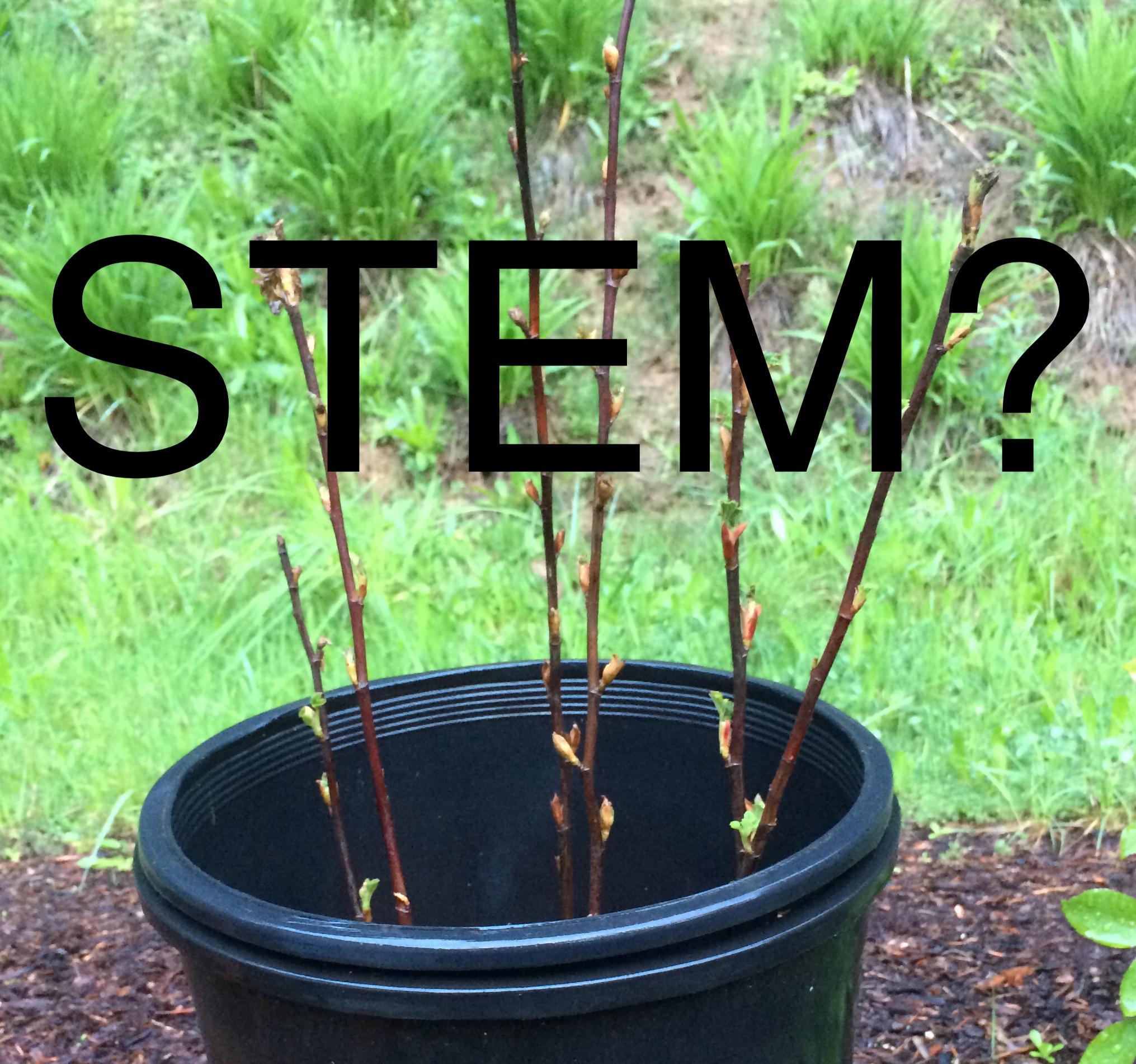 STEM?